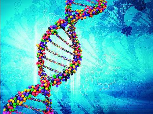首次证明RNA也可被写回DNA 挑战生物学核心法则