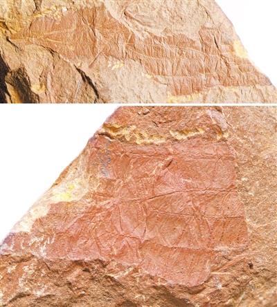 新发现表明石炭纪晚期的昆虫可能已开始用翅膀传播信息