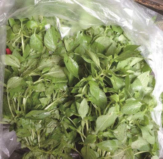 新鲜菜品荆芥一斤卖到14元 不易储藏产量大打折扣