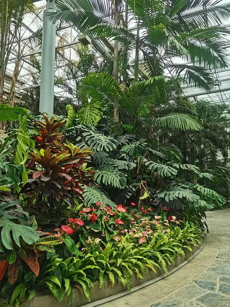 郑州植物园恢复开放 本周六热带植物展览温室也将开门迎客