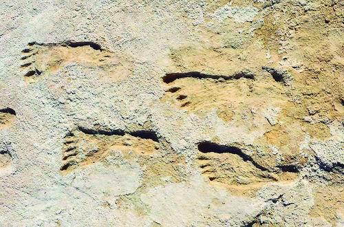 美国新墨西哥州公园一个古老湖床岸边发现人类脚印化石