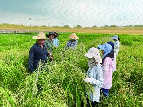 揭示了水稻钙离子感受器ROD1精细调控水稻免疫