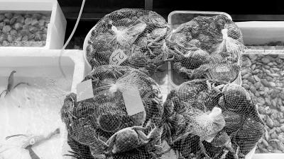 郑州市场上的螃蟹等海鲜价格是否已有明显下降?